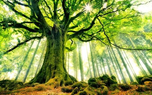 Tolerance stromu